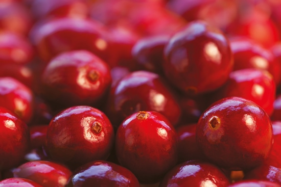 Teaserbild : Kanadische Cranberries